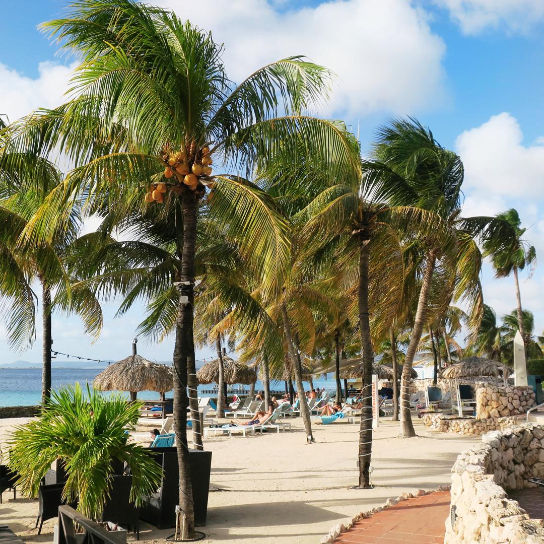 Gelezen op Bonaire: strand en palmbomen