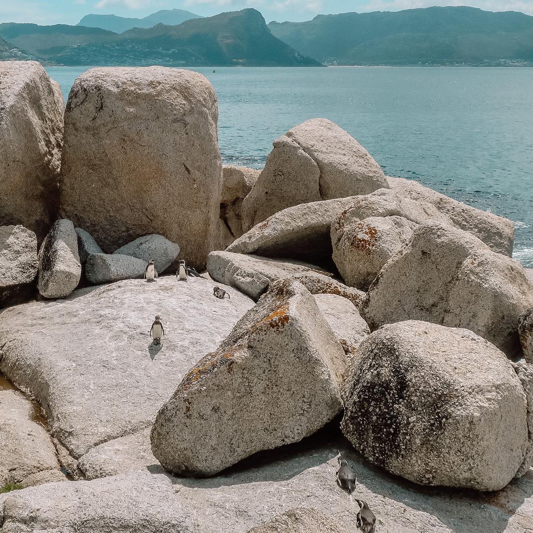 Bezienswaardigheden: Kaapstad, Boulders Beach met pinguïns!