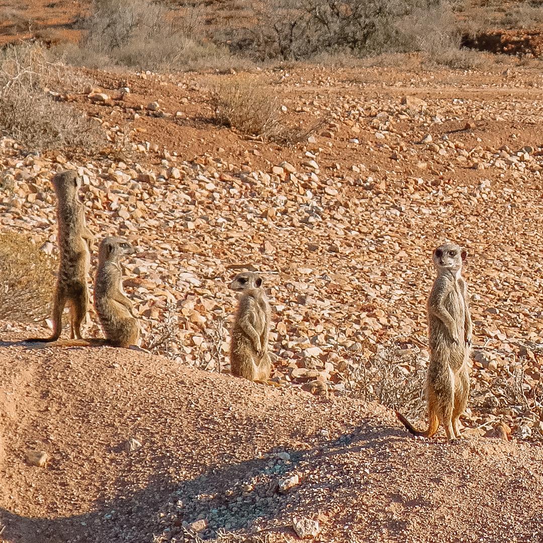 Bezienswaardigheden: Oudtshoorn, Zuid-Afrika